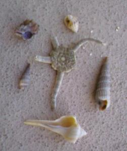 broken starfish, some screwdriver shells, and the others I described earlier